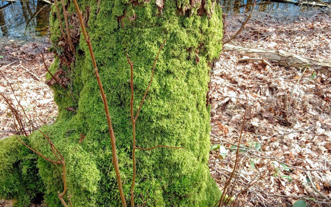 Das Versteck hinterm Baum